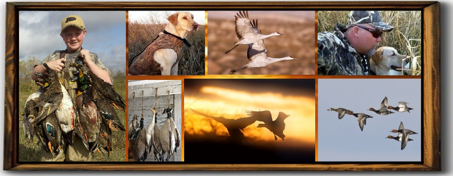 Texas Duck Guide,texas duck hunting, Texas Duck Guides, Texas Waterfowl Guides, Snow Goose Guides, Texas Snow Goose Hunting, Texas Hog Hunting, Texas hunting Guides, waterfowl hunting, dove hunting, sandhill crane hunting,sandhill crane hunting guides, Texas sandhill crane guides, goose, snow goose, guides, texas waterfowl guide